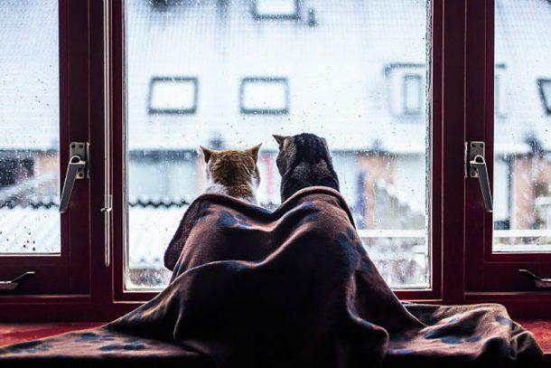 Погода в Первоуральске: теплый плед и какао, а не вот это вот всё