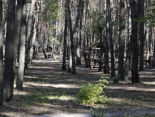 Белгородские депутаты ужесточили наказание занарушение правил безопасности влесах