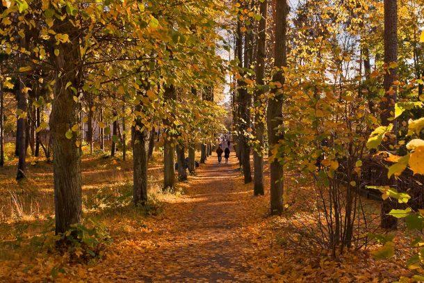 Время гулять по аллеям и пинать листья