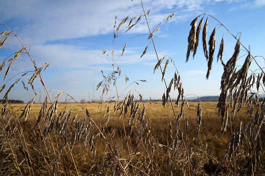 Голодного года в Первоуральске не будет однозначно