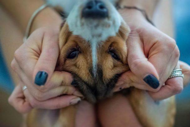 Результаты конкурса «Символ года — ваша собака»