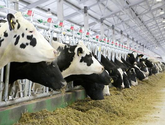 Белгородская область стала первой вЦФО попроизводству мяса имолока