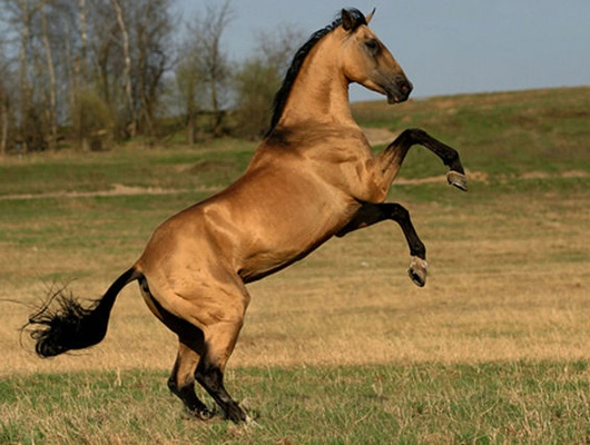 Закражу лошади белгородцу грозит колония строгого режима