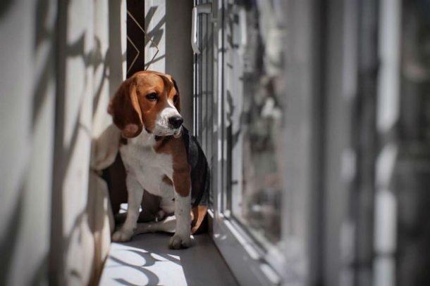 Конкурс «Символ года: ваша собака» набирает обороты