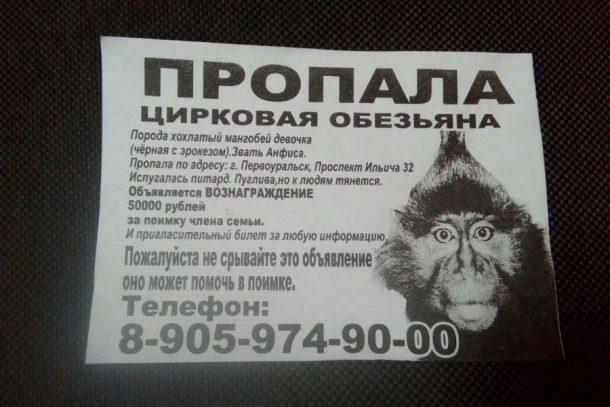 В Первоуральске пропала обезьяна