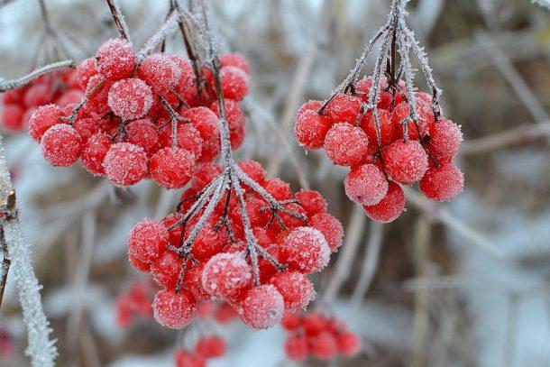 Погода в Первоуральске: мороз и солнце