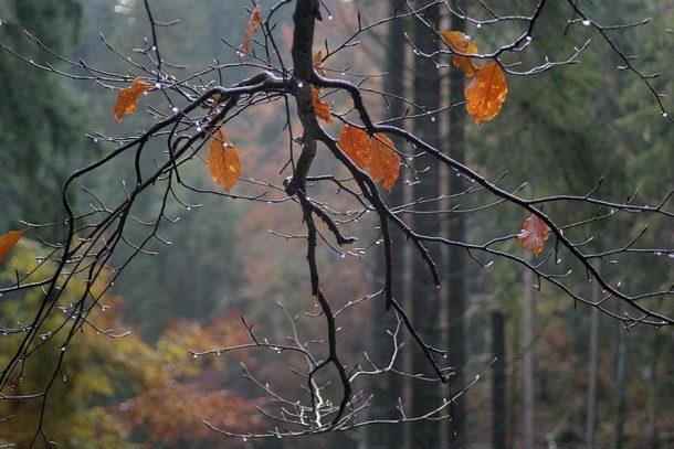 Погода в Первоуральске: нас ждут теплые выходные