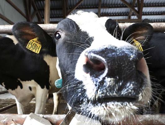 Зачем набелгородских предприятиях ввели электронную ветеринарную сертификацию