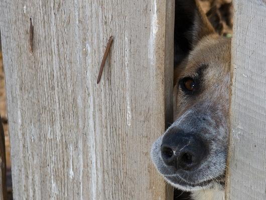 Житель Чернянского района убил трёх соседских собак