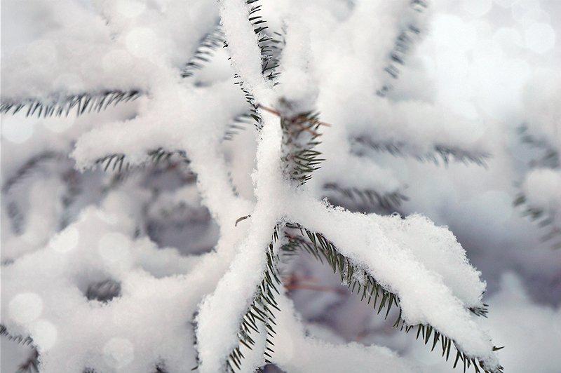 Где можно купить новогоднюю елку