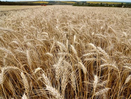 Белгородская область увеличит цену аренды сельхозземель