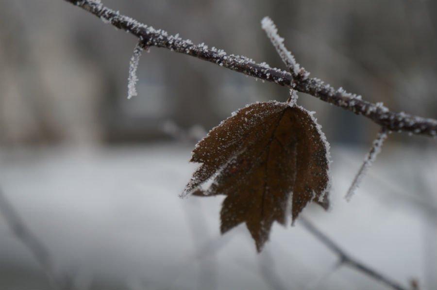 Когда надоело ждать снег