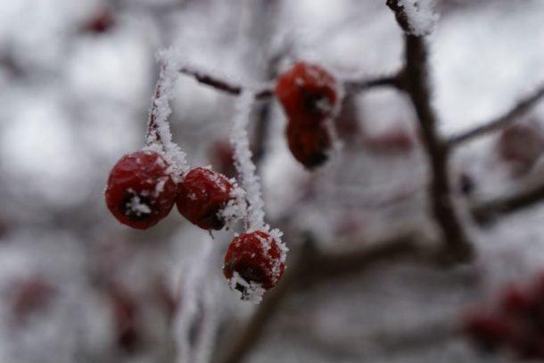 Погода в Первоуральске: без шапки больше не походишь