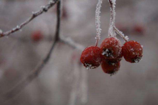 Погода в Первоуральске: небольшой минус и снег